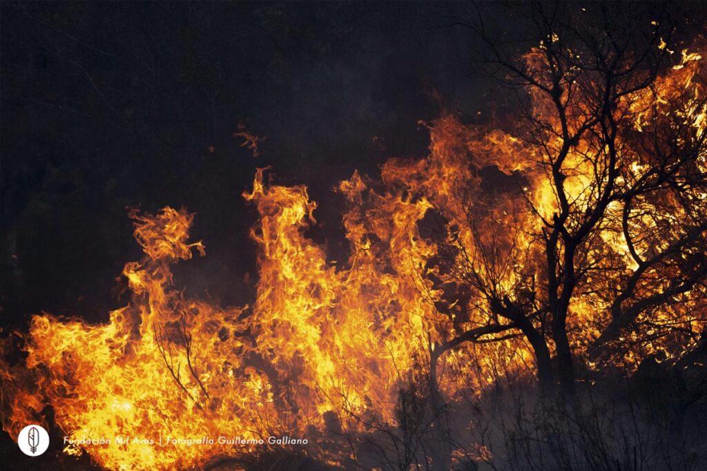 Incendios forestales en la Provincia de Córdoba