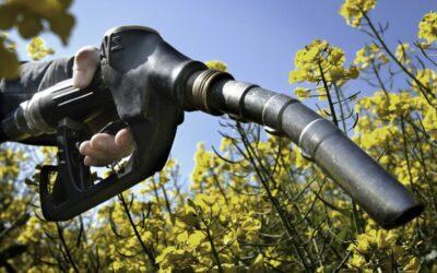 Agrocombustibles: festejo de año nuevo para la contaminación con discurso verde
