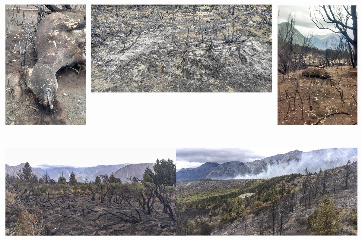 Incendios forestales en El Bolsón