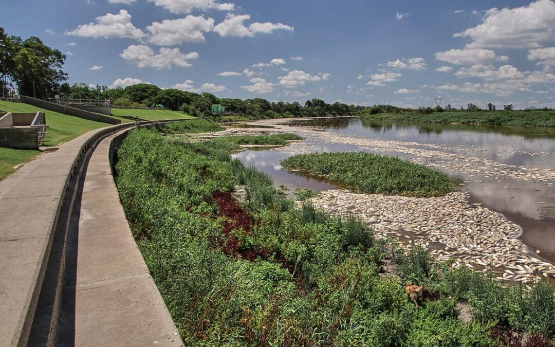El informe completo sobre la presencia de agroquímicos en los peces del Río Salado