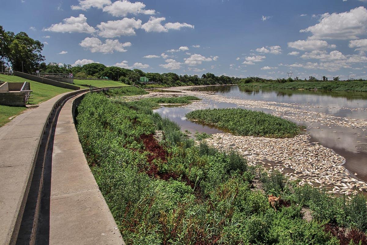 Peces muertos a orillas del Río Salado en la provincia de Santa Fe