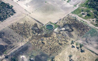 Desmonte en Salta: el gobierno de Sáenz busca arrasar 28 mil hectáreas en un mes