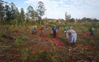 Misiones: familias recuperan 166 hectáreas para producir alimentos sanos