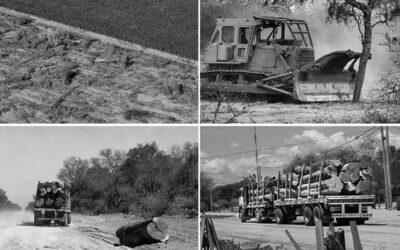 Chaco: ¿Qué son las centrales de biomasa y cuál es su relación con los desmontes?