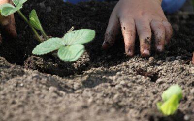 Comenzará a dictarse la Tecnicatura en Agroecología en Mercedes