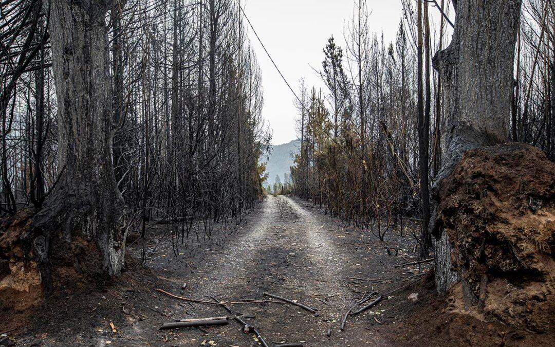 """""""La ayuda para los incendios nunca llegó al Lof Cañio"""""""