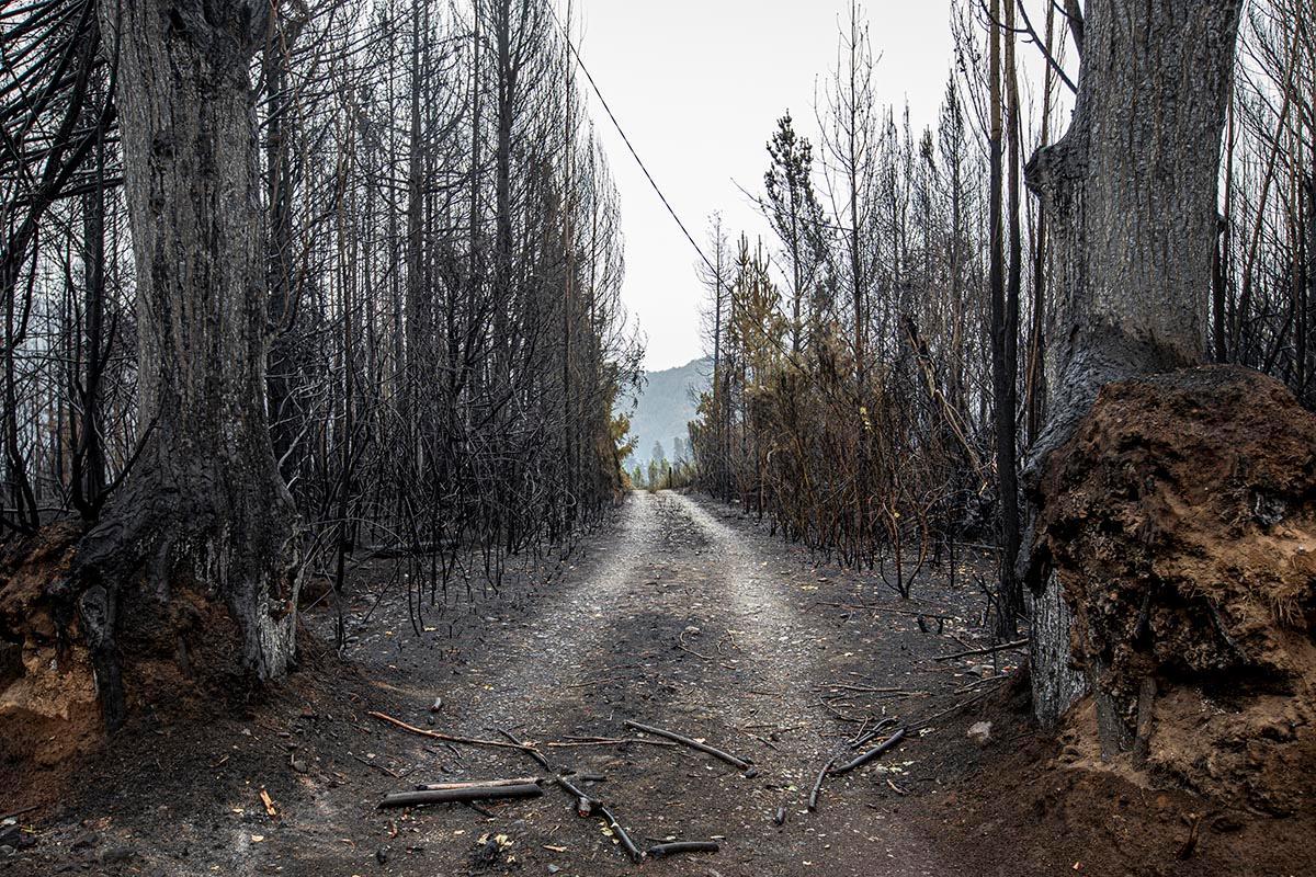 Incendios en la comarca andina