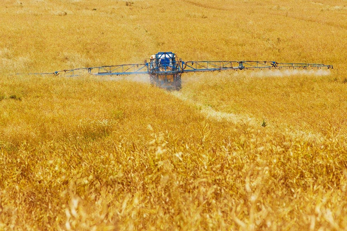 La agricultura química perjudica a la agricultura agroecológica