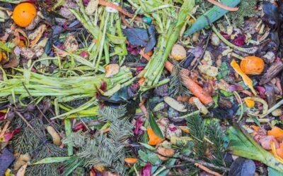 Desperdicio de alimentos: el 17 por ciento de la comida disponible va a la basura