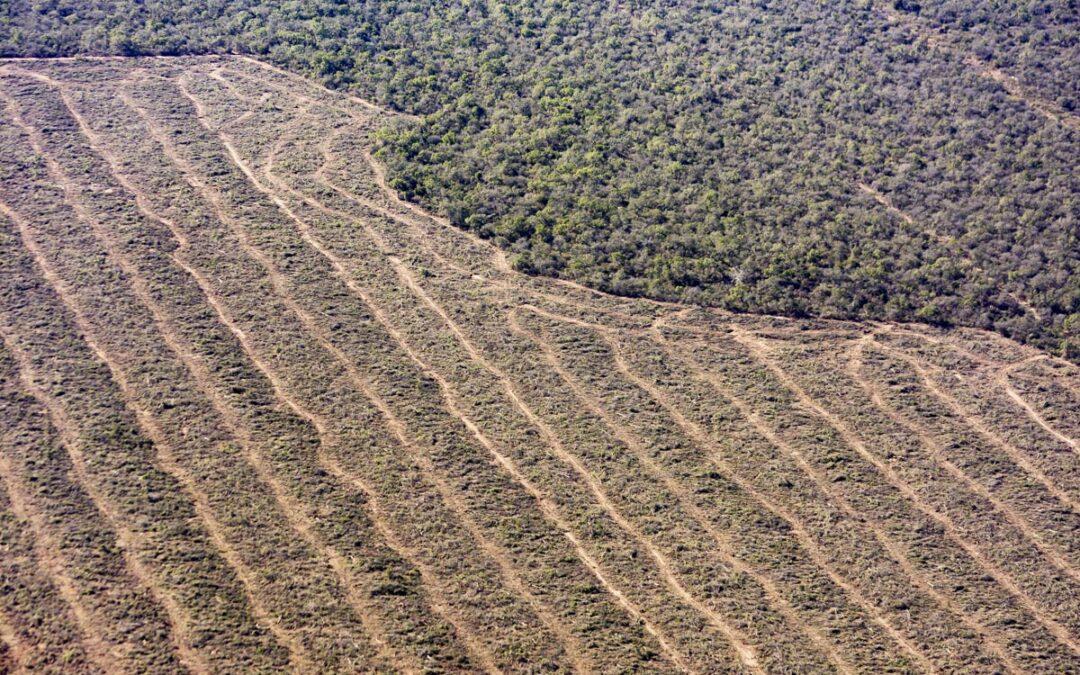 """Cabandié: """"Si seguimos con esta tasa de deforestación, en 70 años nos quedaremos sin bosques nativos"""""""