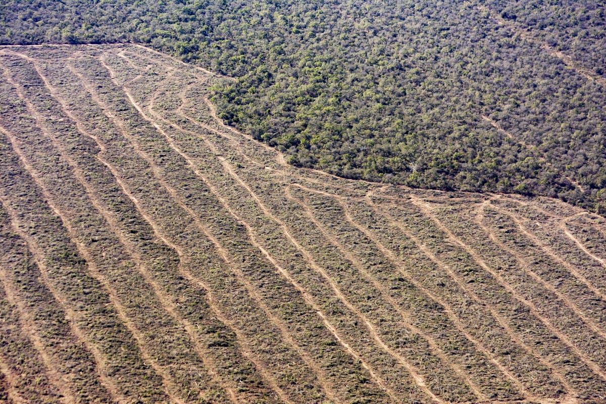 """Cabandié: """"Si seguimos con esta tasa de deforestación, en 70 años nos quedaremos sin bosques nativos en Argentina"""""""