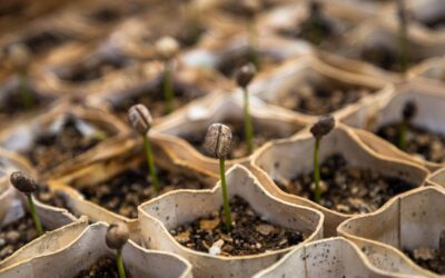 Alerta por el control empresario sobre las semillas