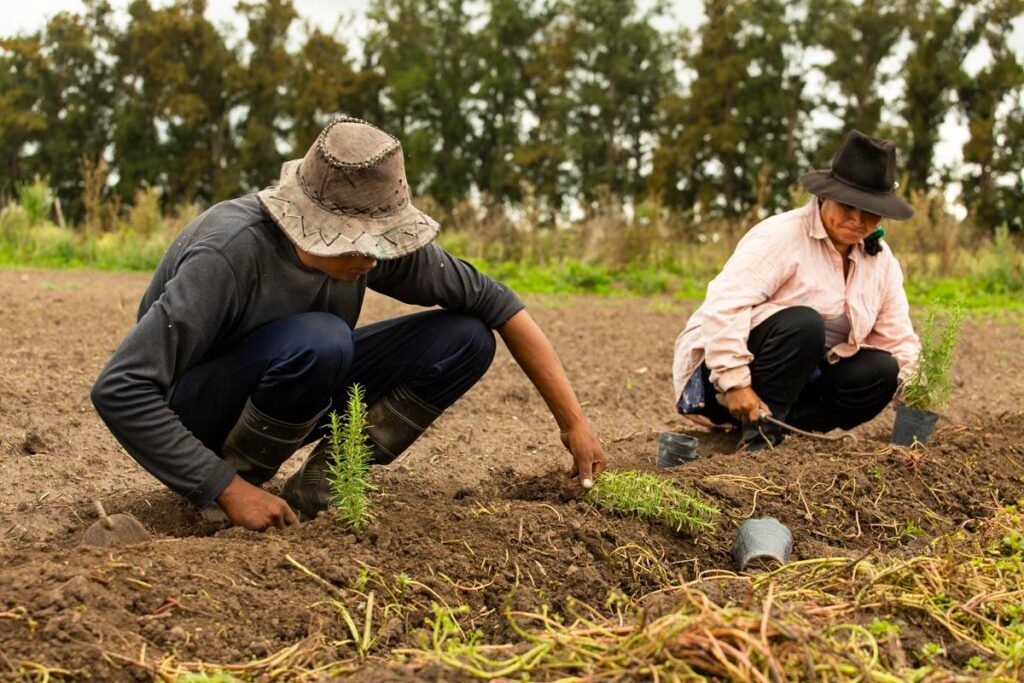 Directrices sobre alimentación y nutrición de la FAO
