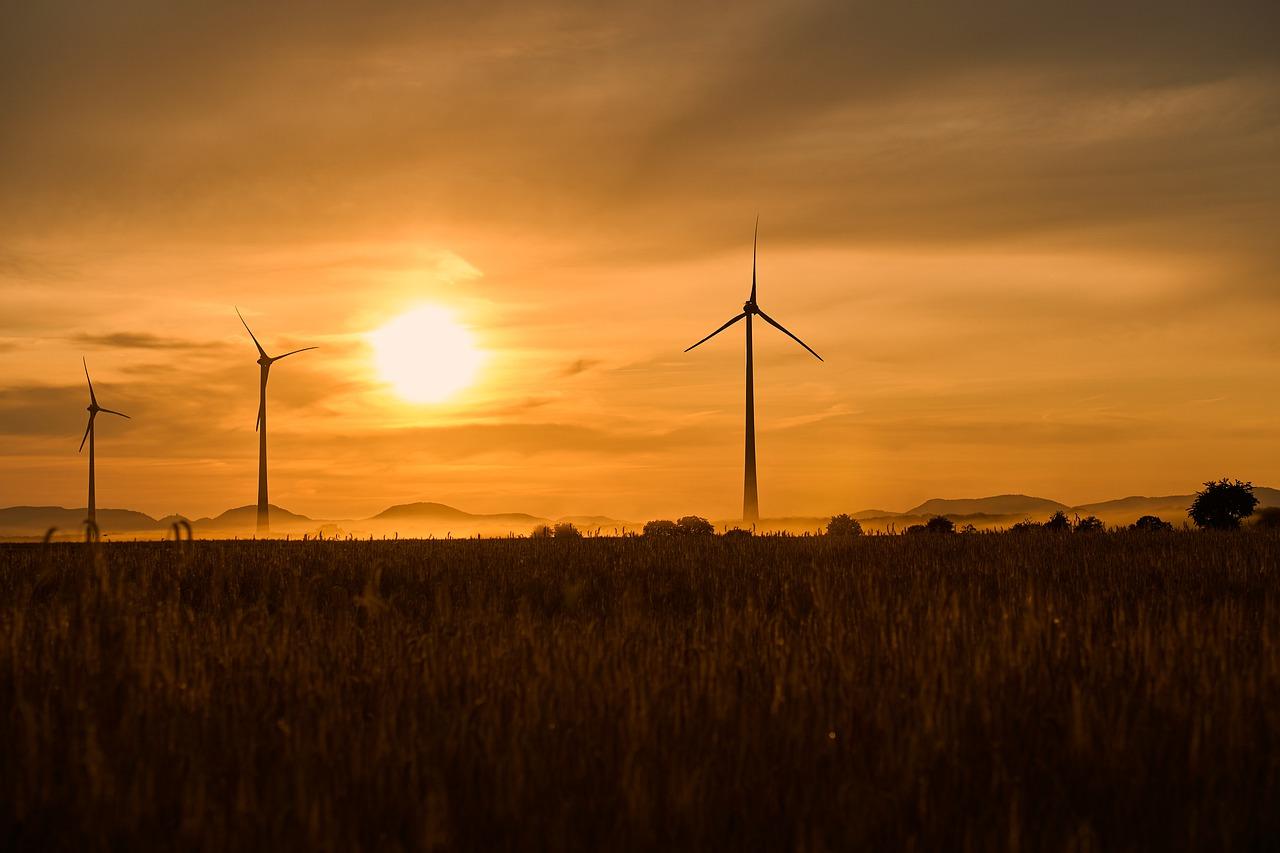 """De la """"revolución verde"""" a los monocultivos energéticos"""