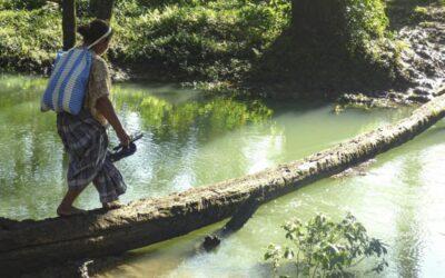 Los pueblos indígenas, «guardianes de los bosques»