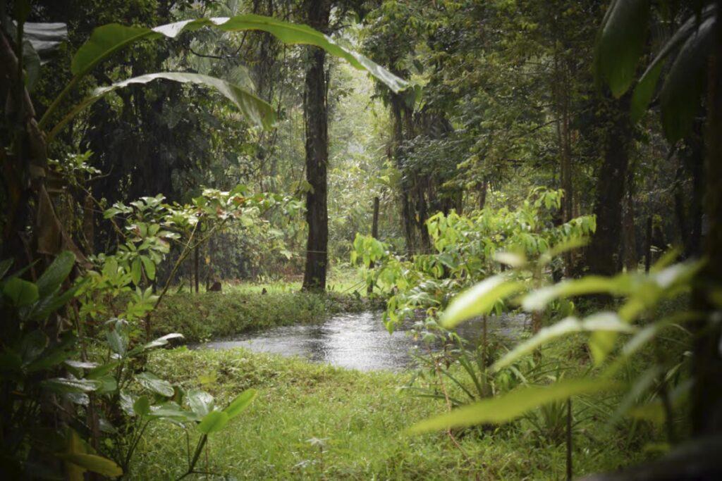 """Los pueblos indígenas, """"guardianes de los bosques"""""""