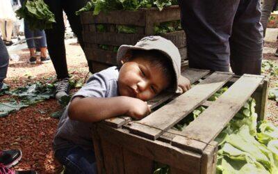 La vuelta al campo, documental sobre las luchas campesinas por el buen vivir