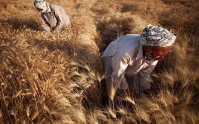 Soberanía alimentaria: 25 años de una bandera de las luchas campesinas