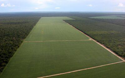 El Gobierno amplía el Presupuesto y la soja sigue tapando el bosque