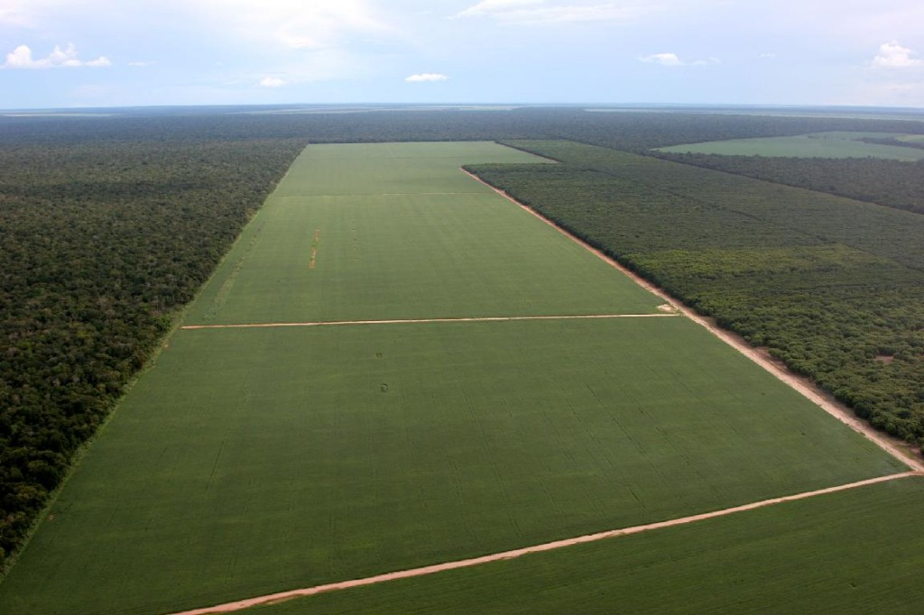 Deforestación para dar lugar a plantaciones de soja