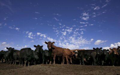 El precio de los alimentos: la carne como un bien de lujo