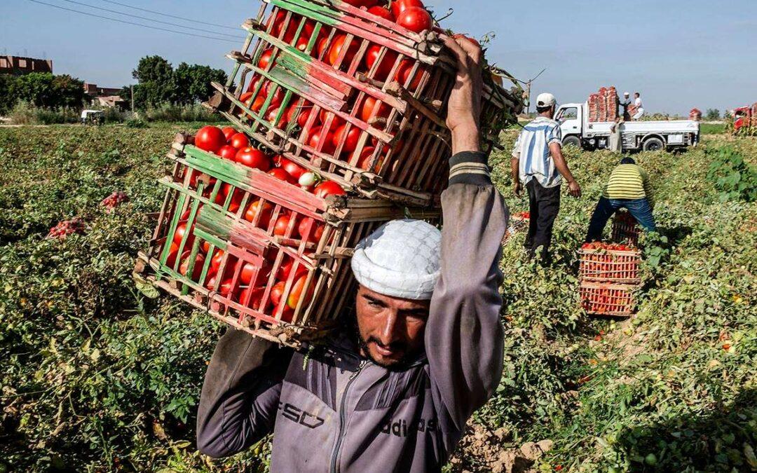 """Alimentos: """"Un nuevo acuerdo popular entre el campo y la ciudad"""""""