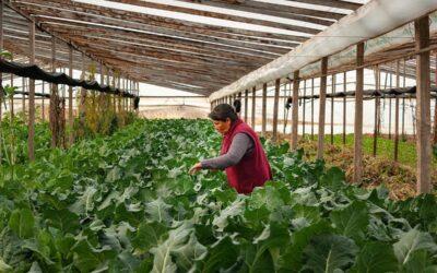 La agroecología como un proceso colectivo