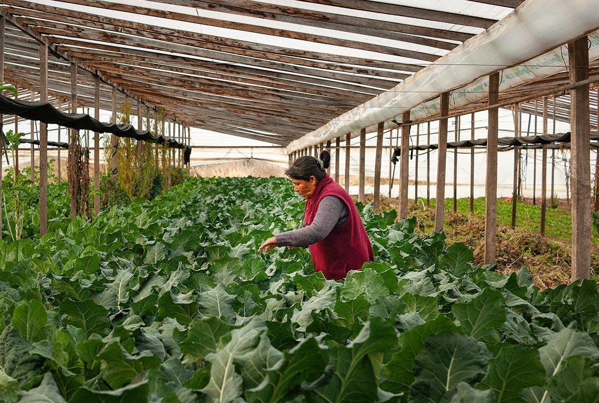 Columna de agroecología Bianca Coleffi