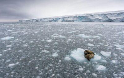 Aumento de temperatura global y su impacto en la salud y la alimentación