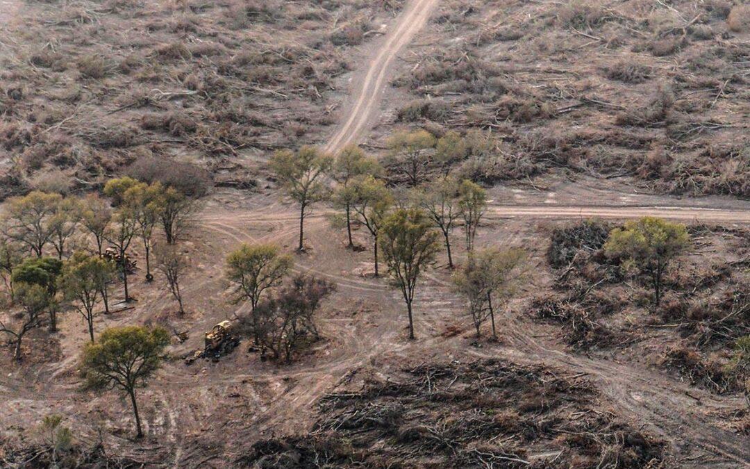 Capitanich avanza en el ordenamiento territorial de bosques sin consenso de las organizaciones