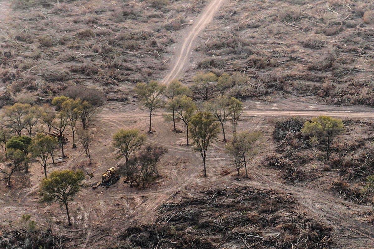 Desmonte en Chaco