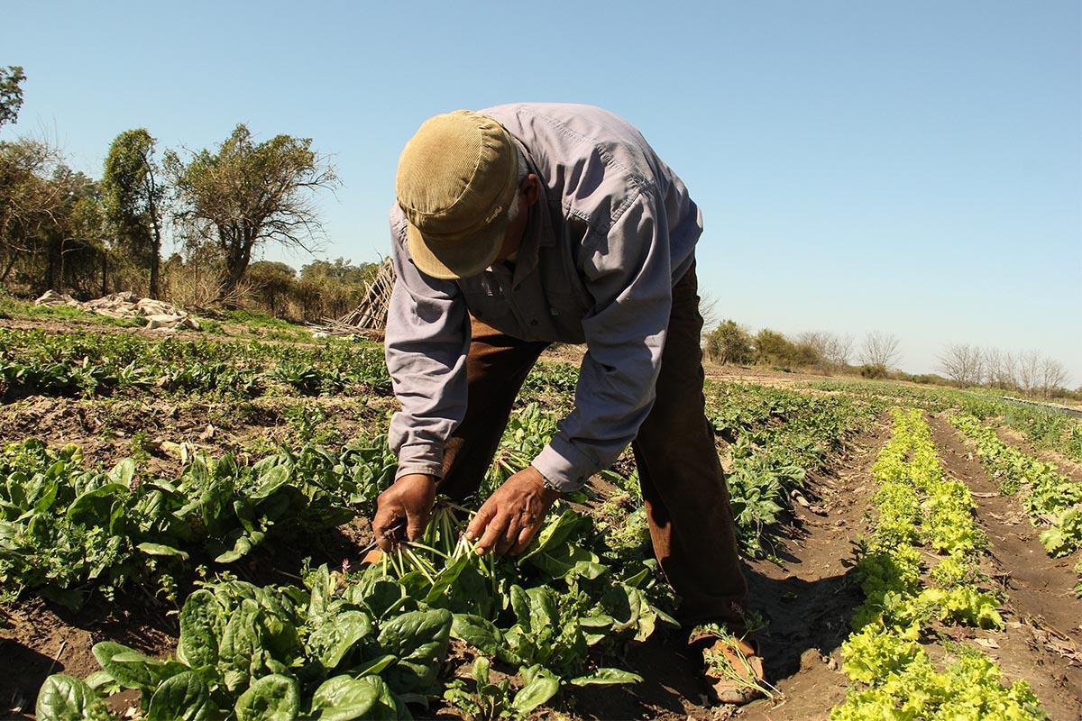 Lanzamiento de congreso de agroecología