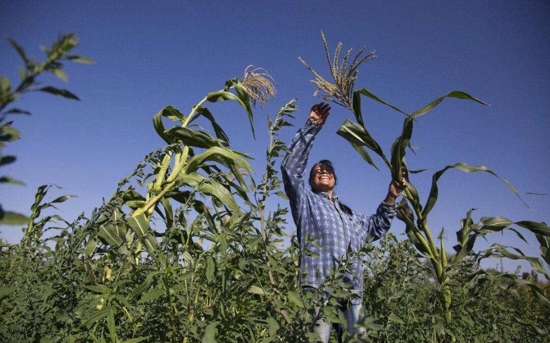 Mesa Agroalimentaria Argentina: la voz del campo que alimenta