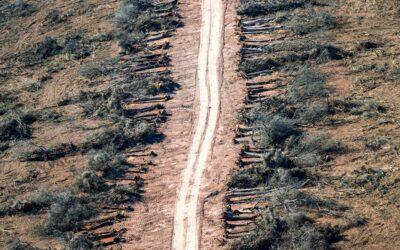 Chaco, miles de hectáreas desmontadas y desalojos campesinos