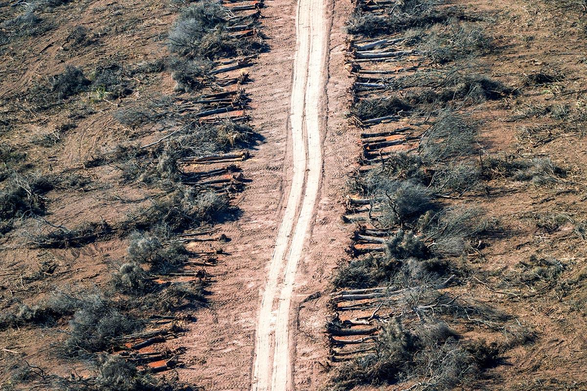 Desmontes en la provincia de Chaco