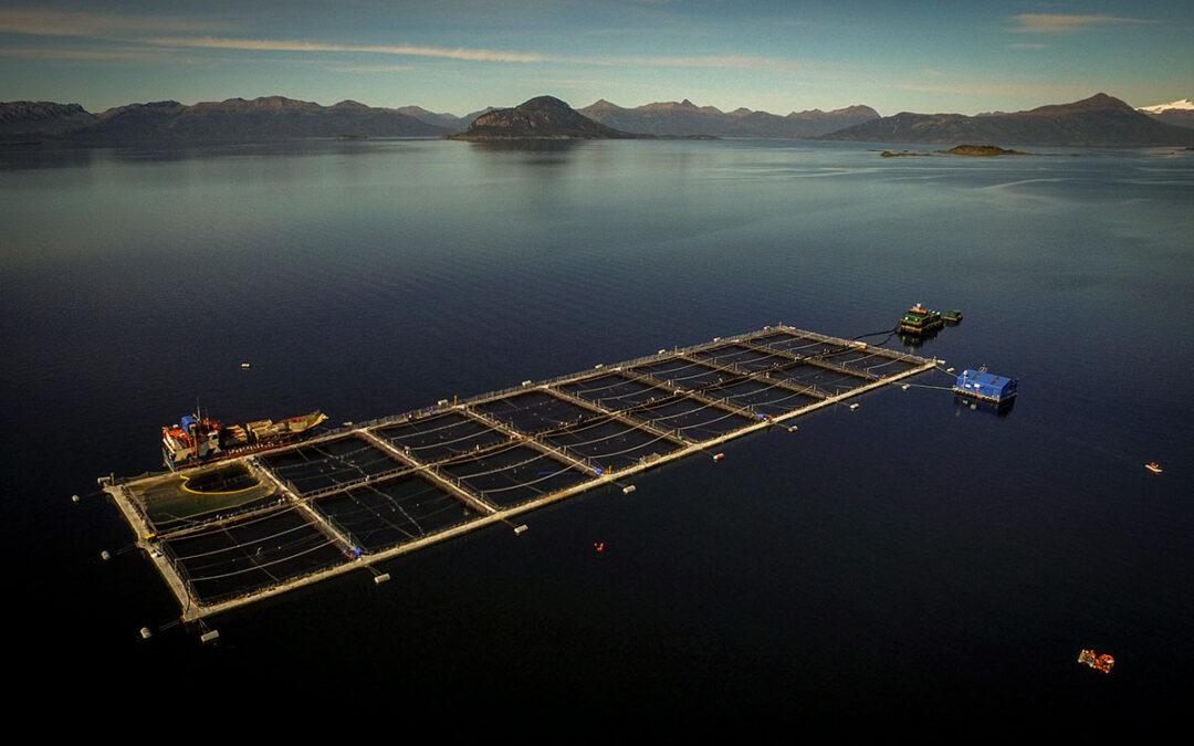 Salmoneras en Tierra del Fuego: ¿Productos para élites o ambiente sano para todos?