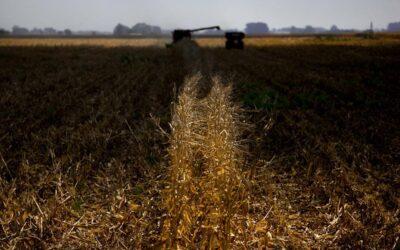 Avanzan los cultivos de maíz y trigo: ¿El fin del reinado sojero?