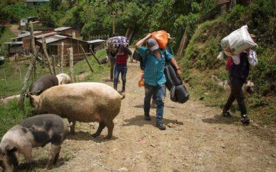 Cuatro mil campesinos desplazados por el extractivismo y la violencia en Colombia