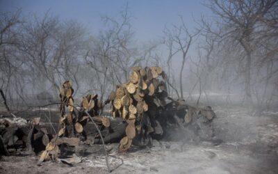 Arde el extractivismo: incendios, sequías y un modelo agotado