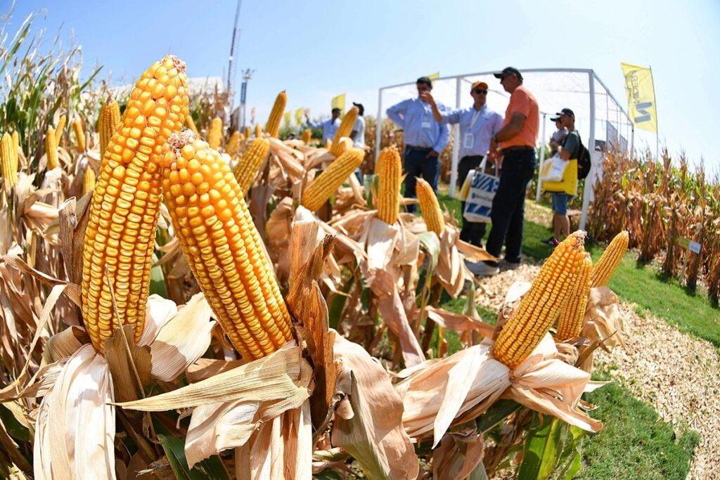 Feria de agro. El hambre no se detiene durante la pandemia. Entrevista-fakhri-michael-relator-onu