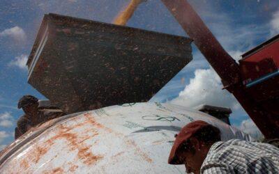 Silobolsas y agrotóxicos, una combinación que aumenta el impacto socioambiental