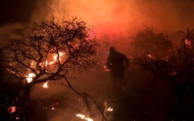 Incendios en Córdoba, otra vez: 40.000 hectáreas menos de bosque nativo