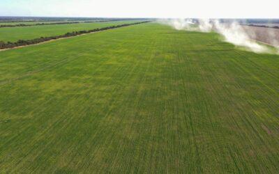Un llamado de alerta para aplicar el principio precautorio al trigo HB4