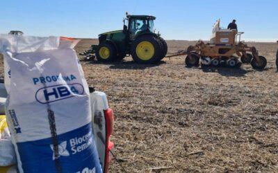 La Fiscalía Federal pide suspender la aprobación del trigo HB4